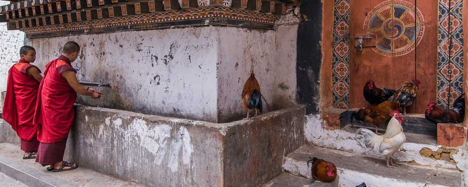 Bhutan, monks at a water tap and some chickens are hanging out nearby