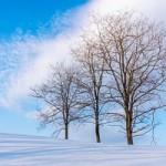Hokkaido: Winter Photography