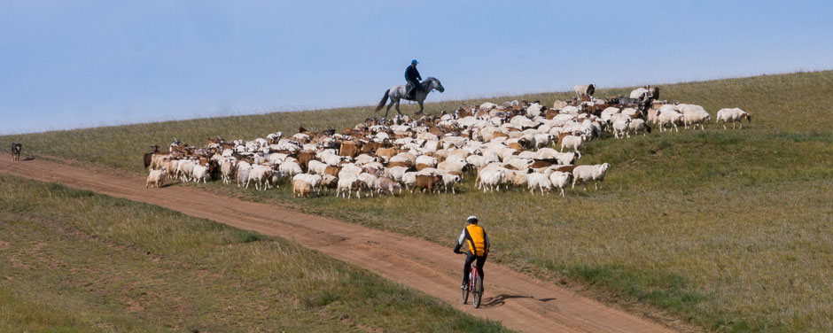 Mountain biking on the steppe grasslands. A nomadic horseman with his flock