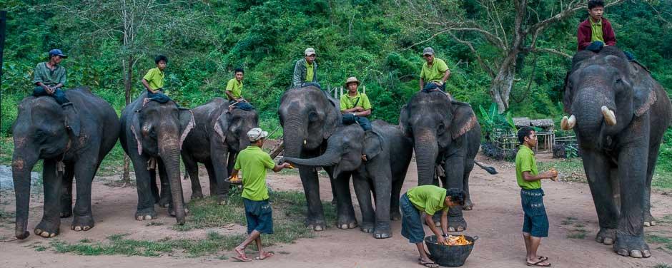 Green Valley Elephant Camp, near Kalaw, Myanmar