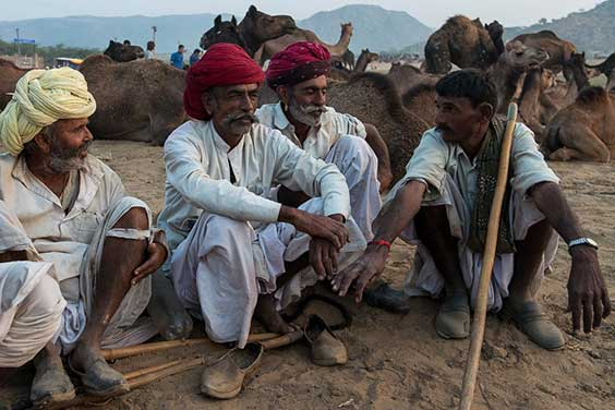 Rajasthani men with their camels